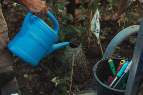 Useful Tips From The Pros To Grow Crops In Your Garden